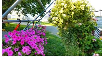 Hanging_Baskets1