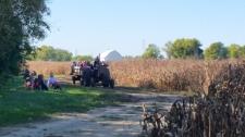 Hay Ride Corn