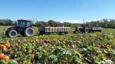 Hay Ride Pumpkin Patch