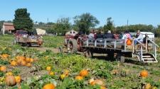 Hay Ride Pumpkin