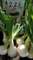 June_Candy_Onions