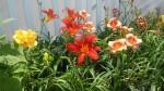 Perennials_Blog