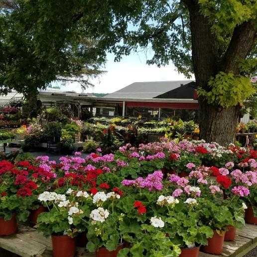 Spring_Market