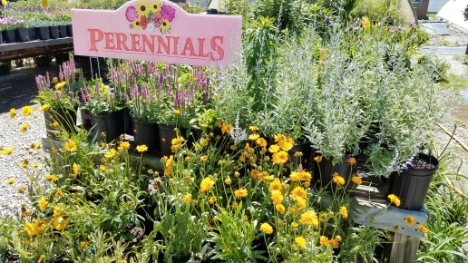 Spring_Perennials