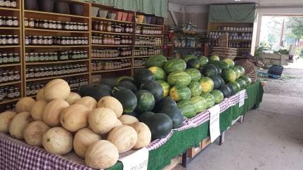 Summer_Melons