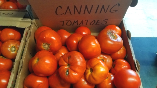 Canning_Tomatoes
