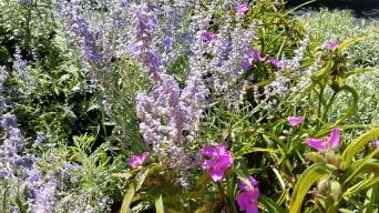 Perennials1
