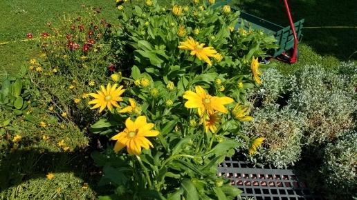Perennials2