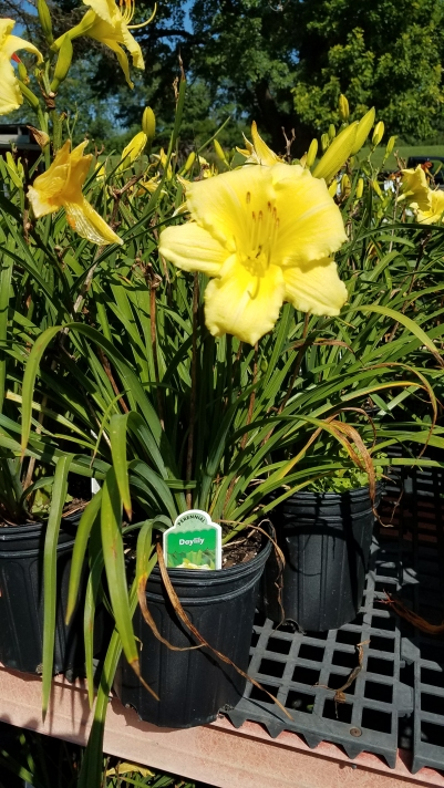 Perennials7