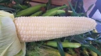 White_Corn
