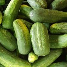 Pickling_Cucumbers3