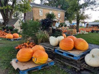 Giant_Pumpkins1