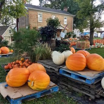 Giant_Pumpkins1