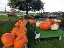 Giant_Pumpkins3