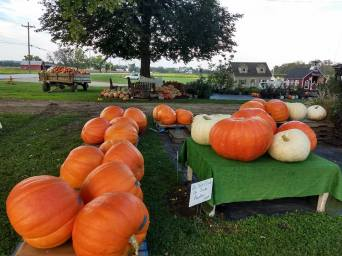 Giant_Pumpkins3