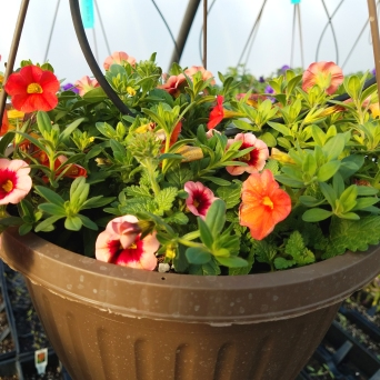 Hanging_Baskets5