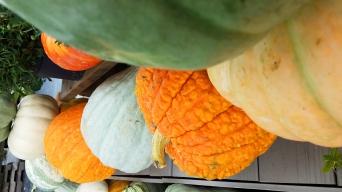 PumpkinsNew