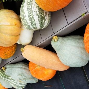 PumpkinsNew1