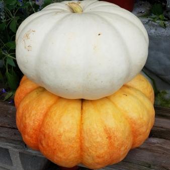 PumpkinsNew3
