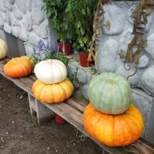 PumpkinsNew4