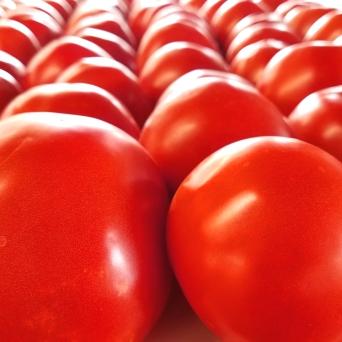 TomatoesCloseup