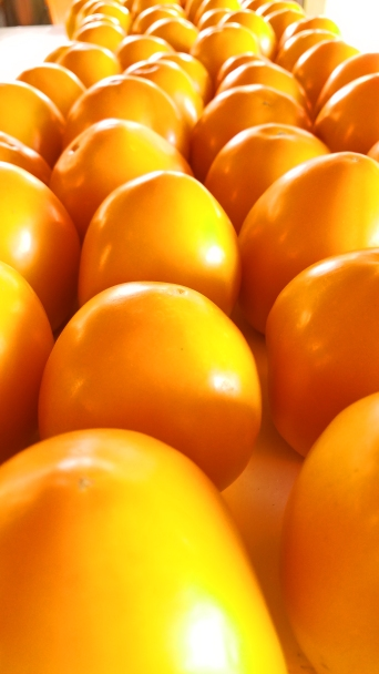 YellowTomatoes