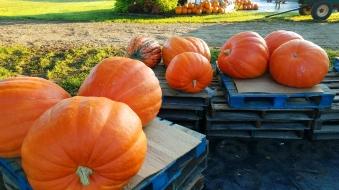 BigPumpkins