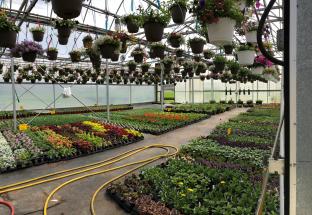 greenhouse 4.5