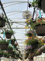 hangingbaskets4.5